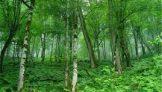 واگذاری شرکت جنگل شفارود ،خیانت بزرگ و تاریخی به مردم تالش بزرگ ؟